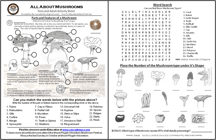 Mushroom Activity Sheets – Cascade Mycological Society
